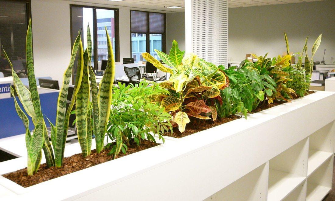 best indoor plants for office. image01 best indoor plants for office i