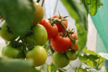 Benefits of a<br>Vege Garden